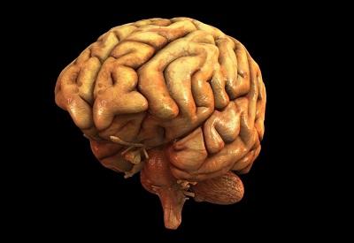 El conocimiento del cerebro humano es clave