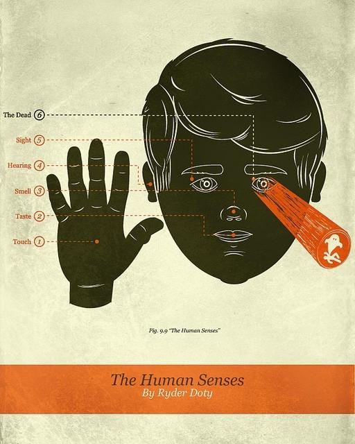 Los sentidos nos sorprenden constantemente