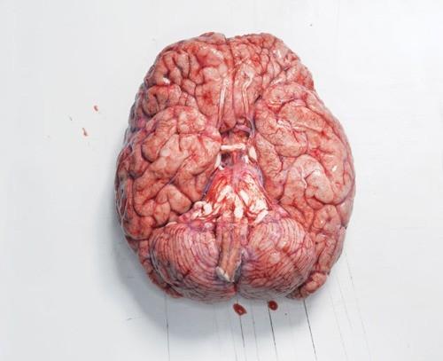 El cerebro es el teatro de las emociones