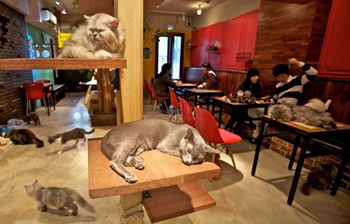 Productos singulares: La Gatoteca, el primer cat café de España