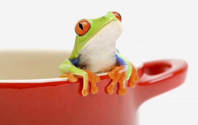 Síndrome de la rana hervida en la estrategia de marketing