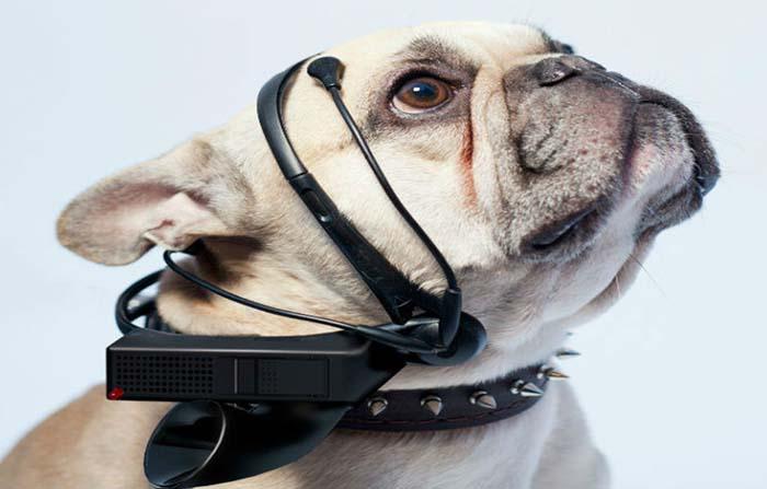 No More Woof, traductor para perros interpretando sus ondas cerebrales