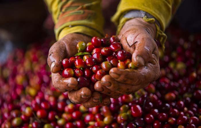 """""""2020: Café del Cauca"""", proyecto de mejora de vida para las caficultoras"""