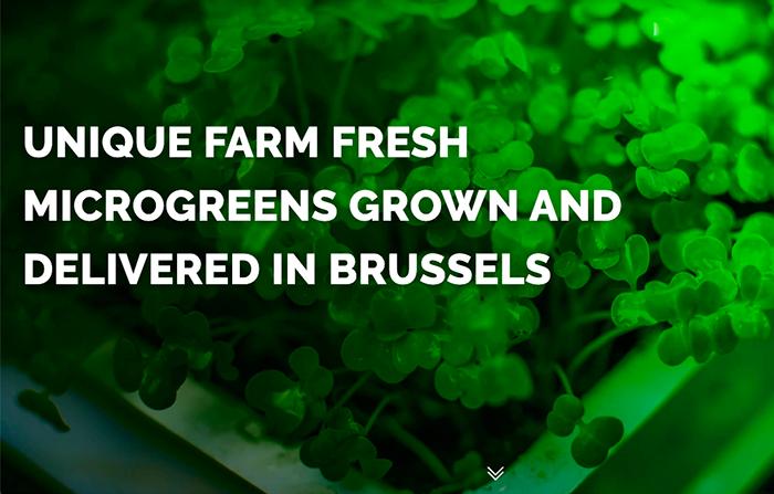 MicroFlavours, cultivo de vegetales y verduras con orientación vertical