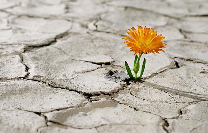 Cambio en los hábitos de conducta: Sensación de vulnerabilidad inherente