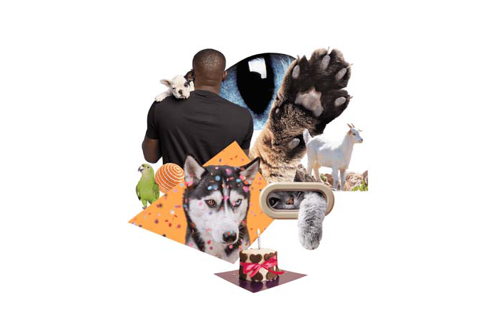 Informe de tendencias inspiradoras Pinterest 100: Mascotas consentidas