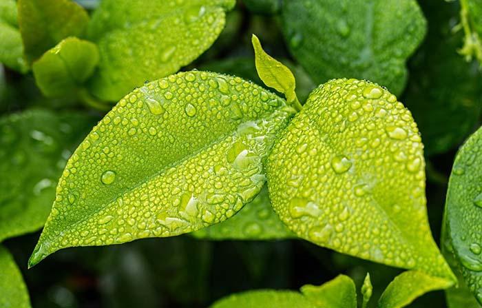 Tipos de consumidor por nivel de conciencia ambiental: Ecoactivos